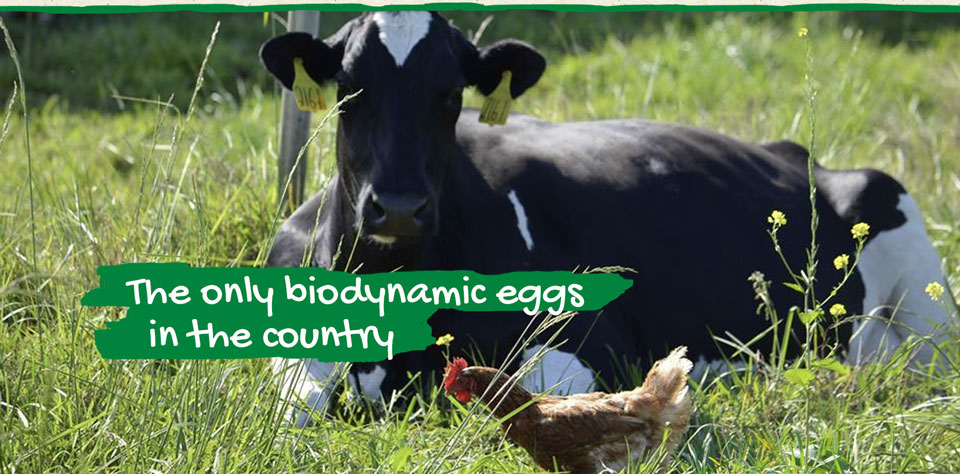 Stueve Farms. The only biodynamic eggs in the country.