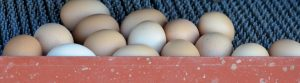 Stueve Family Farms Eggs